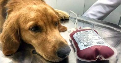 Banco de Sangue Veterinário em Osasco salva vidas de cães e gatos