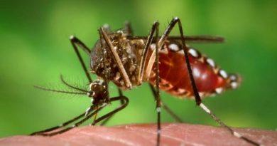 Ministério da Saúde lança campanha de combate ao mosquito transmissor da dengue, zika e chikungunya