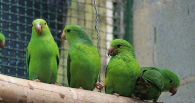 Cetas realiza soltura de 94 aves no litoral paulista